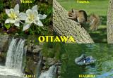 Ottawa: Flora, Fauna, Feathers & Falls
