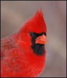 cardinal13.jpg