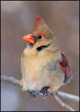 cardinal16.jpg
