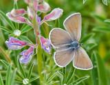 Washington Butterflies