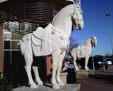 HORSES.1.jpg