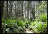 Healesville - Tanglefoot Track