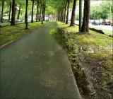 Entre la rue du Grand Forestier et la rue Lemaire.