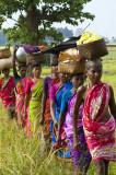 Bastar - Chhattisgarh - India