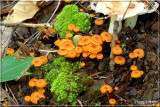 Orange Fairy Caps.JPG