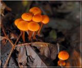 OrangeFairyCaps232.jpg