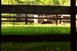Wooden Fence With Horses