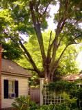 House Aad Tree
