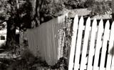 Picket Fence Askew