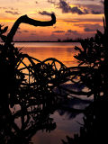 Prospect Sunset 11