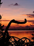 Prospect Sunset 4