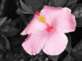 Bloom PS