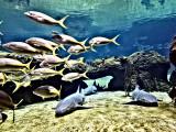 Underwater PS