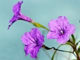 Tri-Blooms