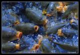 Hungry Carp, Banglaore