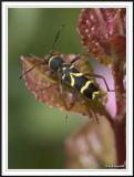 Beetles -  order Coleoptera