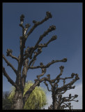 april 2007: Trees