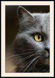 Loulou, chat de gouttière (2)