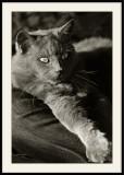 Loulou chat de genouxoule diable domestique