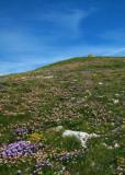 sommet du Mont-Aiguille, juillet 2007