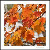 autumn leaves - Salem Lake