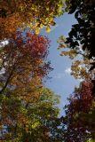 North Carolina Fall