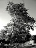Bill's Tree