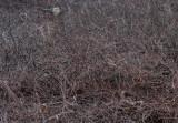 Where's Bambi? 2   39