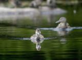 duckling 128