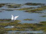 tern lands