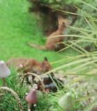 fox cubs march 2005