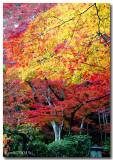 web3-color-trees.jpg