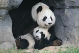 Mei Lan & Lun Lun