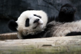 Mei Lan waking up