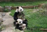 Lun Lun and Mei Lan