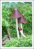 Fungi 4.jpg