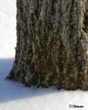 ds20070216_0047a1w Tree Trunk.jpg