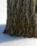 ds20070216_0047a2w Tree Trunk.jpg