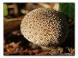 mushroom / Pilz