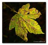 herbstlich / autumnal