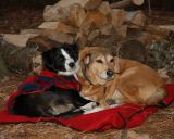 Hanah and Holly / Camping dogs