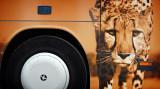 wild bus line