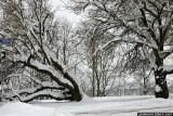 April Cleveland Snowstorm