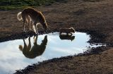 these 3 are playing with reflections 0474
