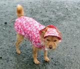 Skosh's new rain outfit 0490
