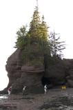 Nouveau Brunswick, La route de retour, Baie de Fundy pict4716.jpg