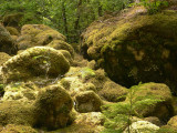 mossy boulders.jpg