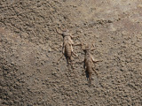 Stoneflies.jpg