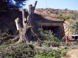 Tree-removal-2.jpg
