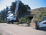Tree-removal-1.jpg